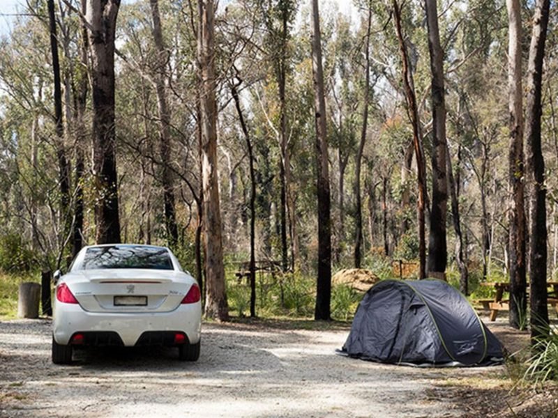 A car parked next to a pitched tent with bush in the background at Bald Rock campground and picnic