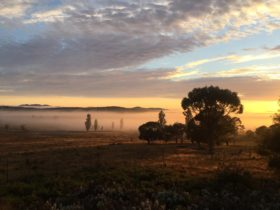 Sunrise over misty paddock with scattered cloud and dark silhouetted eucalypts & poplar trees.