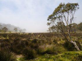 Black Swamp campground, Barrington Tops National Park. Photo: John Spencer/NSW Government