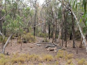Camping area at Dows camp, set in rugged landscape of bushes and trees. Photo: Blake McCarthy ©