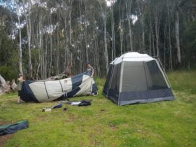 Tents in Federal Falls campground. Photo: Debby McGerty/DPIE