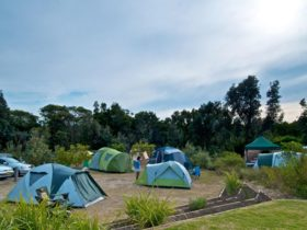 Tents in Freemans campground, Munmorah State Conservation Area. Photo: John Spencer/DPIE