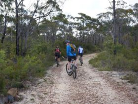 Three cyclists ride the trail from Wentworth Falls to Woodford, Blue Mountains National Park. Photo: