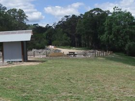Mann River campground and picnic area with toilet facilities, Mann River Nature Reserve. Photo: