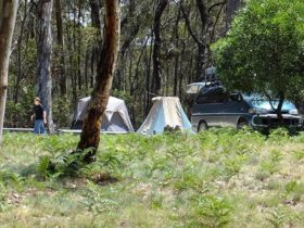 Mount Werong campground, Blue Moutnains National Park. Photo: J Bros/OEH.