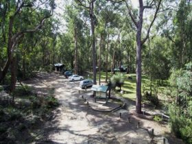 Car park and picnic areas, Mulligans campground, Gibraltar Range National Park. Photo: D Hayden/OEH