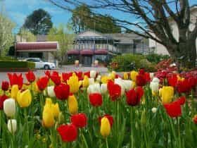 Nesuto Leura Gardens