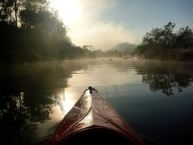 Canoeing Down the Nymboida River