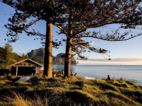 Relax at the Pinetrees boatshed
