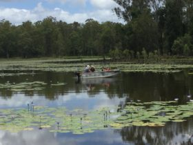 People in kayaks on the lagoon, surrounded by lilly pillies.