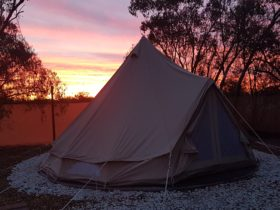 Charlies Camp Lightning Ridge