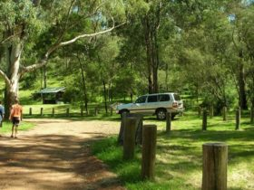 Washpool campground, Towarri National Park. Photo: NSW Government