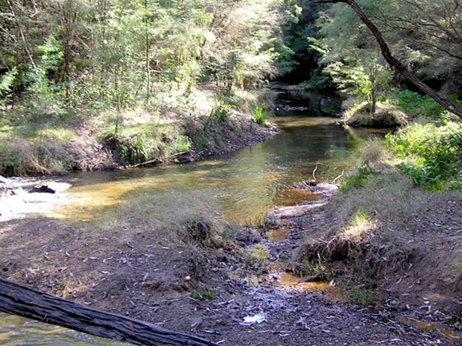 Wheeny Creek campground, Wollemi National Park. Photo: OEH