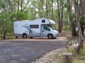 Campervan parked at Wollomombi Campground, Oxley Wild Rivers National Park. Photo: Rob Cleary/DPIE