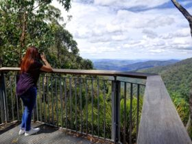 Andrew Laurie Lookout at Gloucester Tops
