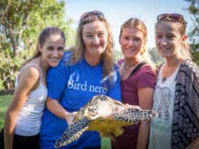 Team at Seabird Rescue holding a turtle