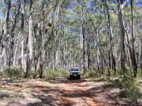 Barraba Track, Mount Kaputar National Park, Photo: Jessica Stokes