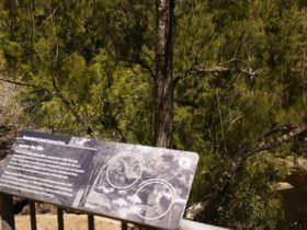 Bomaderry Creek Walk NPWS Discovery Tour
