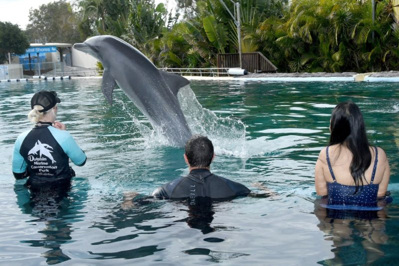 Guests in water with dolphin during shallow dolphin experience at Dolphin Marine Conservation Park