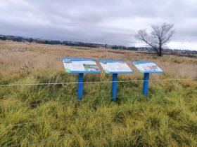 Bathurst, Birdwatching, Wetlands