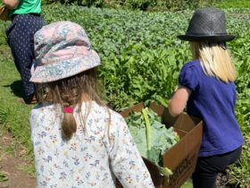 two children carrying box of vegetables exploring farm