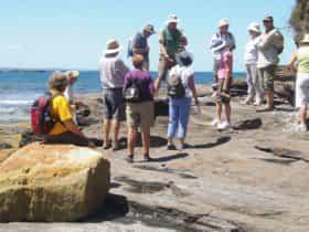Gondwana Fossil Walk