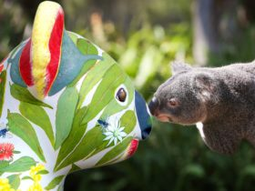 Hello Koalas Sculpture Trail
