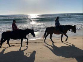 Horses tour on the beach