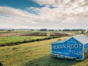 Indian Root Pills Building