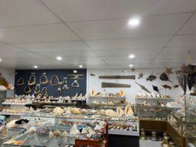 Jim's Seashells & Maritime Antiques
