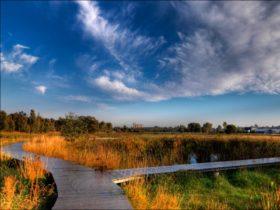 Junee Urban Wetlands