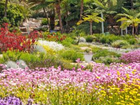 Connections Garden at Australian Botanic Gardens Mount Annan