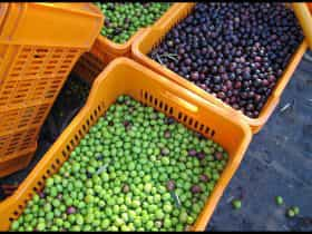 They use traditional, natural methods and grow a variety of olives all unique in flavour.