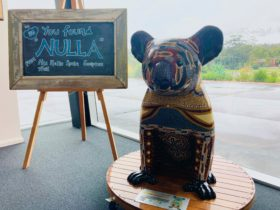 Nulla from Hello Koalas at the Slim Dusty Centre