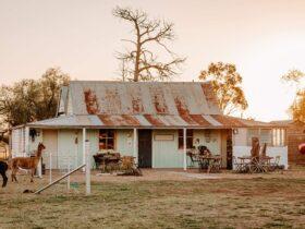 Quentin Park Alpacas farm shop and art gallery