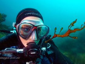 Diver and Weedy