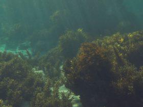 Underwater snorkel trail