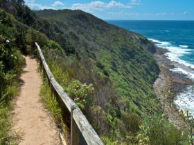 The Coastal Walking Track, Wyrrabalong National Park. Photo: John Spencer