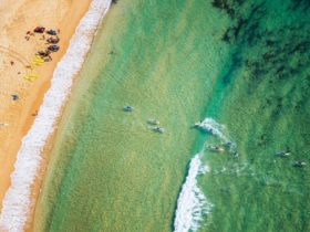 Aerial of paddleboarders at Toowoon Bay, Central Coast