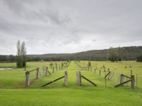 a fenced walking area, cows around