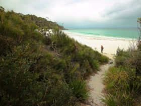 White Sands walk, Jervis Bay National Park. Photo: Andy Richards.
