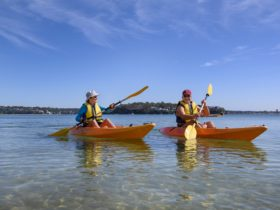 people kayaking along beach in single kayaks