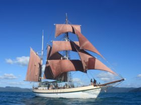 Coral Trekker under sail