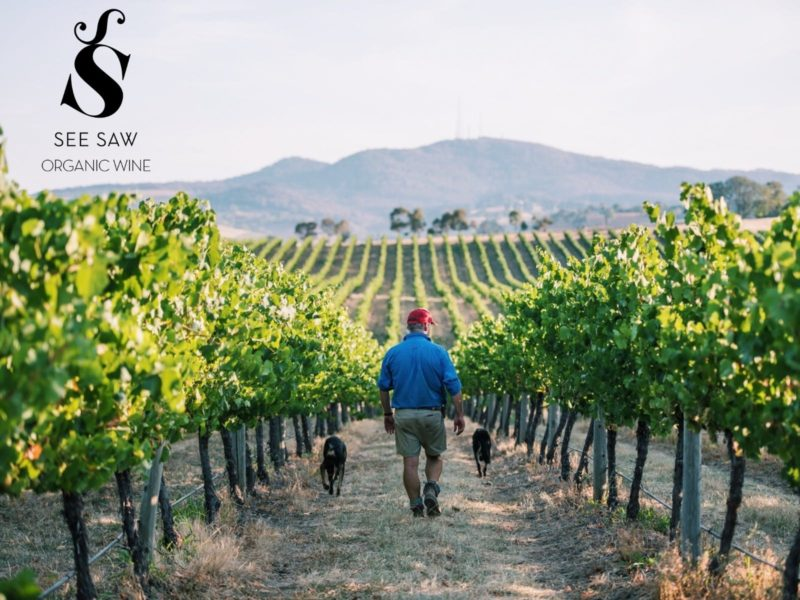 See saw wine exclusive walk and lunch
