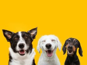 Three happy dogs with yellow background