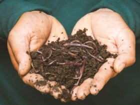Worm Farming and Composting