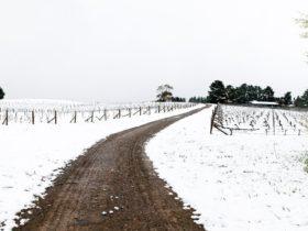 Lark Hill Winery