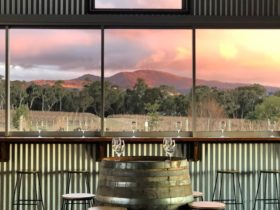 A tasting experience with views across the vines