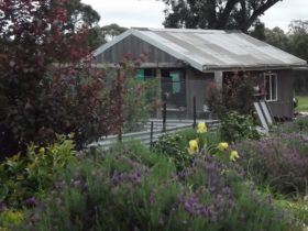 Farm garden and shed