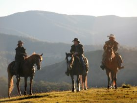 Riders on horsesin the Blue Mounatains overlooking the ravines of the Coxs River